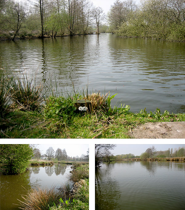 Wyche Angler's Whitwater complex near Whitchurch has three well stocked pools